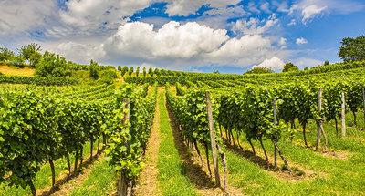 Traditionele wijngaarden in Sancerre