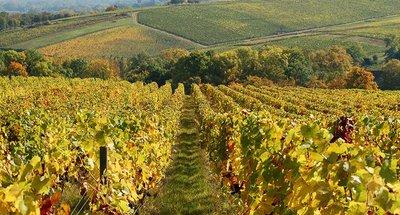Sancerre's beroemde wijngaarden