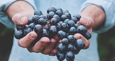 Een mooie tros druiven