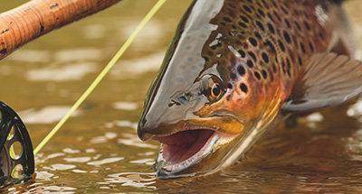 Pêche à la truite