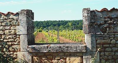 Vignoble et maison ancienne en Charente