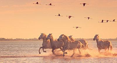 Wilde paarden en roze flamingo's bij zonsondergang