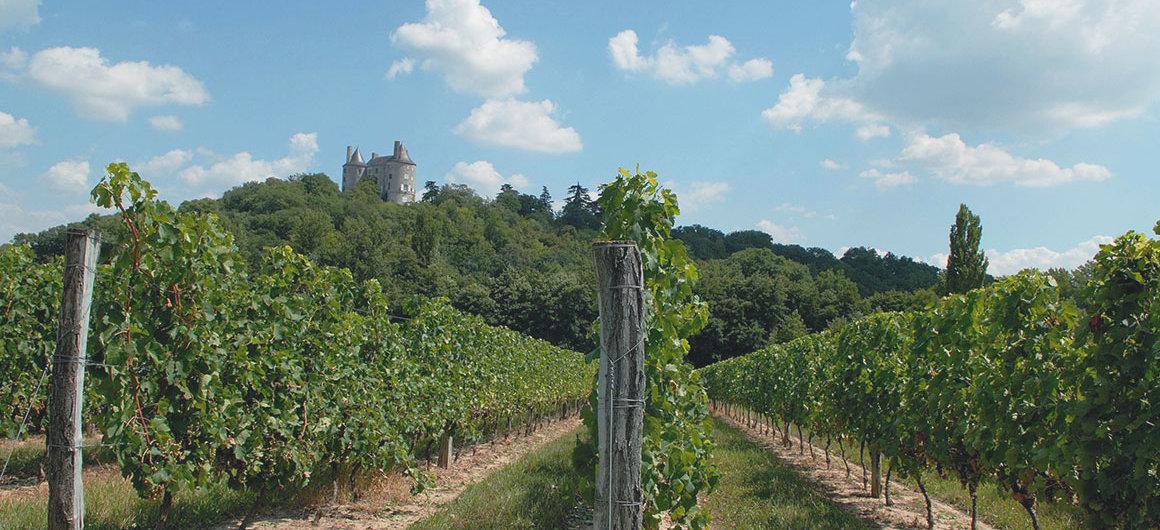 Les vignobles de Buzet, Aquitaine