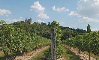 Buzet wijngaarden, Aquitanië